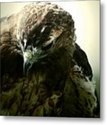 The Stare From The Air Metal Print