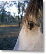 The Staring Eye Of A Clydesdale Horse Metal Print