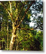 The Strong Tree Metal Print