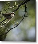 The Summer House Sparrow Metal Print