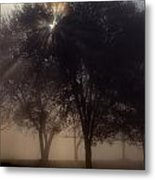 The Sun Peeks Through The Branches Metal Print