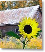 The Sunflower And The Barn Metal Print