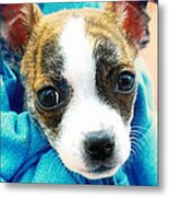 The Three Amigos Teacup Chihuahua Metal Print