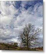The Tree At The Side Of The Road Metal Print