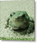 The Tree Frog Metal Print