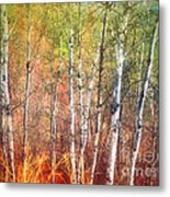 The Trees And The Colour Metal Print