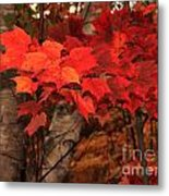 The True Beauty Of Autumn Metal Print
