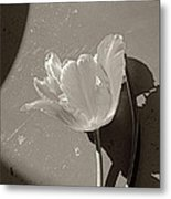 The Tulip And The Shadows Metal Print