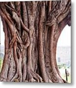 The Twisted And Gnarled Stump And Stem Of A Large Tree Inside The Qutub Minar Compound Metal Print