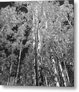 The Two Split Trees Bw Metal Print