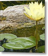 The Water Lily And The Frog Metal Print
