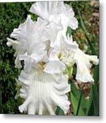 The White Iris Metal Print