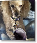 The Wizard Of Dogs Metal Print