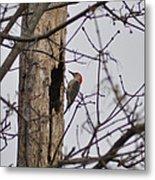 The Woodpecker Metal Print