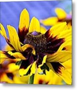 The Wow Factor Metal Print
