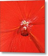 The Zoom Of Red Orchid Metal Print by Pretchill Smith