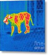 Thermogram Of A Tiger Metal Print