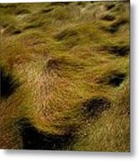 Thick Grasses Blow In The Wind And Form Metal Print