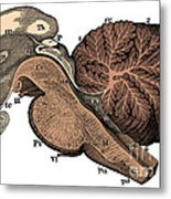 Third And Fourth Ventricles Of The Brain Metal Print
