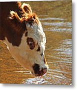 Thirsty Boy Metal Print by Karen Grist