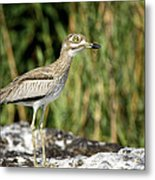 This Is Botswana No.  5 - Water Thick-knee Metal Print