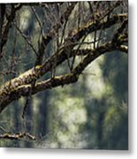 This Is Our World No. 9 - Lets Branch Out Metal Print