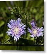 Thistle 131 Metal Print by Charles Warren