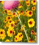 Thistle And Coreopsis 2am-110455 Metal Print