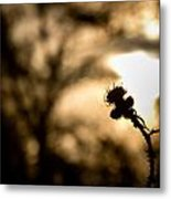 Thistle And Weeds Metal Print by Justin Albrecht