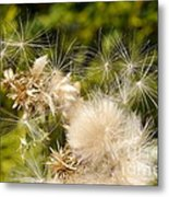 Thistle Down Metal Print