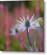 Thistle Dream Grove Metal Print