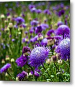 Thistle Field Metal Print
