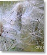 Thistle Seeds Metal Print