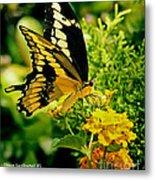Thoas Swallowtail #1 Metal Print