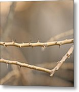 Thorny Desert Plant Inside The Desert Metal Print by Joel Sartore