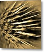 Thorny In Sepia Metal Print