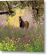Thoroughbred Horse Among Wildflowers In The Chittering Valley, Western Australia Metal Print by Peter Walton Photography