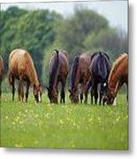 Thoroughbred Horse, Ireland Metal Print