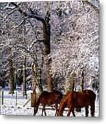 Thoroughbred Horses, Mares In Snow Metal Print