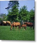 Thoroughbred Horses Metal Print