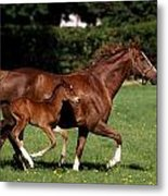 Thoroughbred Mare And Foal Galloping Metal Print