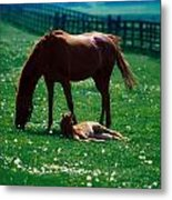 Thoroughbred Mare And Foal, Ireland Metal Print