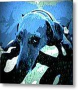 Those Puppy Dog Eyes Metal Print