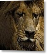 Thoughtful Lion Metal Print