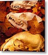 Three Animal Skulls Metal Print