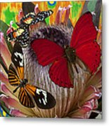 Three Butterflies On Protea Metal Print