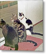 Three Cats Looking Out Into The Forest Metal Print