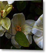 Three Clematis More Metal Print