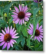 Three Coneflowers Metal Print