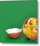 Three Easter Chicks In An Egg Shell Metal Print